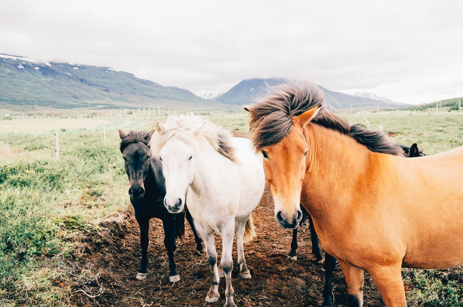 غاية الجمال والابداع لعشاق الخيول 363222914.jpg