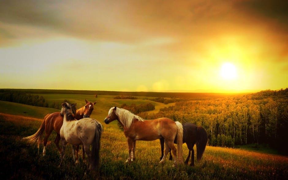 غاية الجمال والابداع لعشاق الخيول 762172446.jpeg